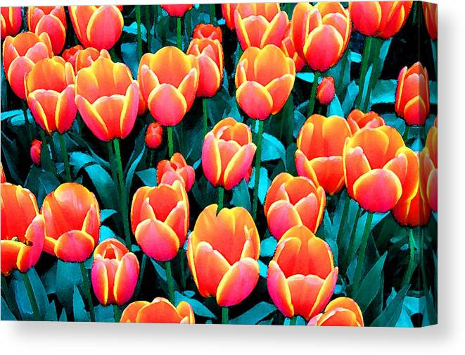 Canvas Print featuring the photograph Tulips in Holland by Gene Sizemore