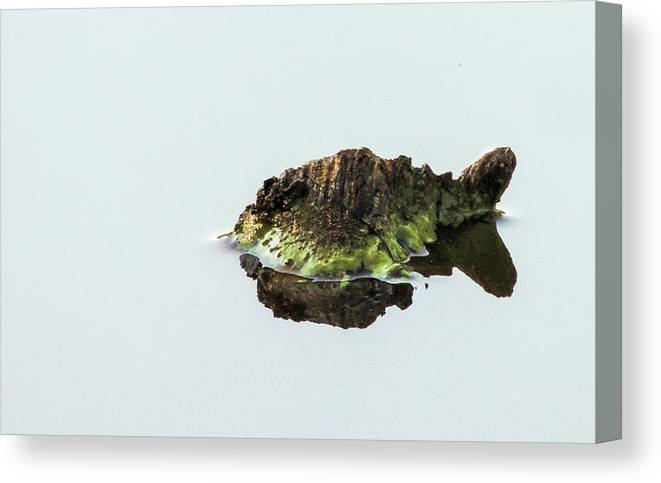 Turtle Canvas Print featuring the photograph Turtle or Mountain by Randy J Heath