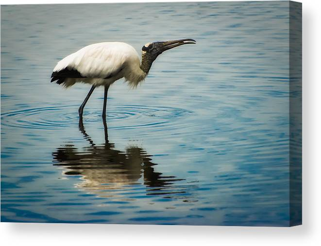 Stork Canvas Print featuring the photograph Wood Stork by Rich Leighton