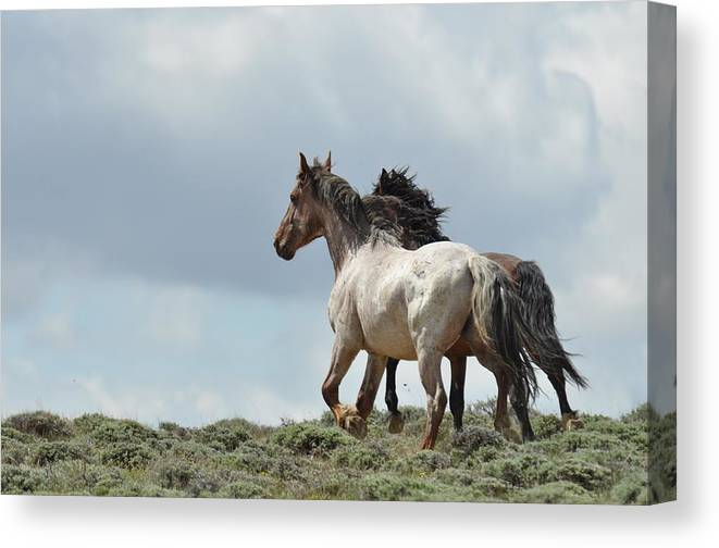 Wild Horses Canvas Print featuring the photograph You Will Never Catch Us by Frank Madia