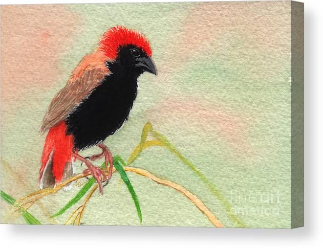 Bird Canvas Print featuring the painting Zanzibar Red Bishop by Lynn Quinn