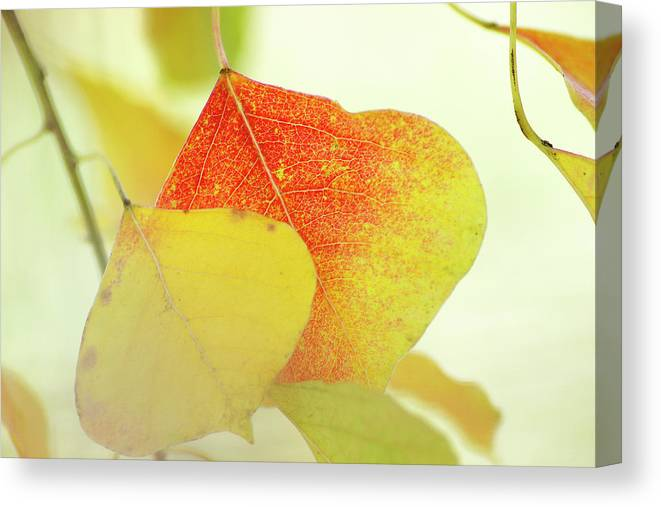 Autumn Leaves Canvas Print featuring the photograph Autumn Leaves by Bill Morgenstern