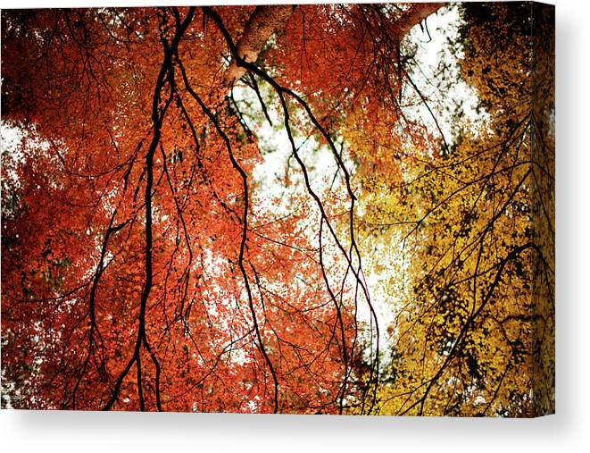 Tranquility Canvas Print featuring the photograph Fall Colors In Japan by Jdphotography