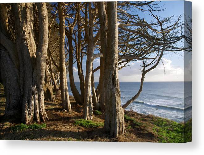 Tranquility Canvas Print featuring the photograph Rustic Davenport Coast by Mitch Diamond
