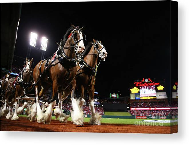 Horse Canvas Print featuring the photograph World Series - Boston Red Sox V St by Ronald Martinez
