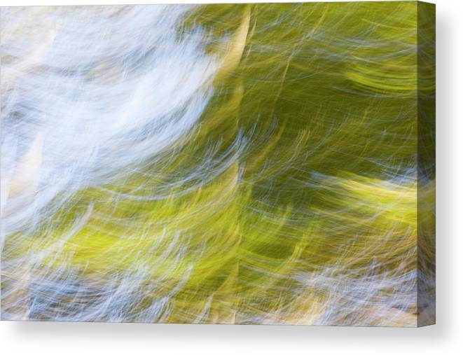 Full Frame Canvas Print featuring the photograph Abstract Close Up Of Trees by Background Abstracts