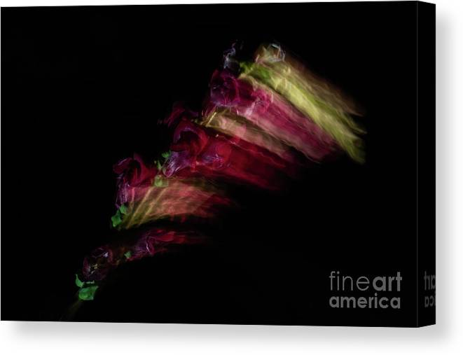 Snapdragon Canvas Print featuring the photograph Amazing Flower Of Snapdragons by Valerie Kovt
