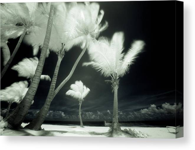 Wind Canvas Print featuring the photograph An Infrared Image Of Tall Palm Trees by Mint Images/ Art Wolfe