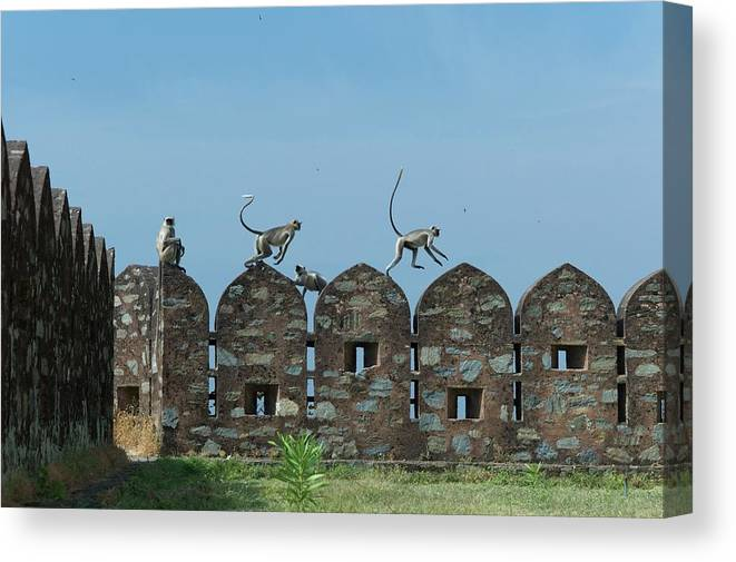 Clear Sky Canvas Print featuring the photograph Apes Playing At Kumbhalgarh by Dominik Eckelt