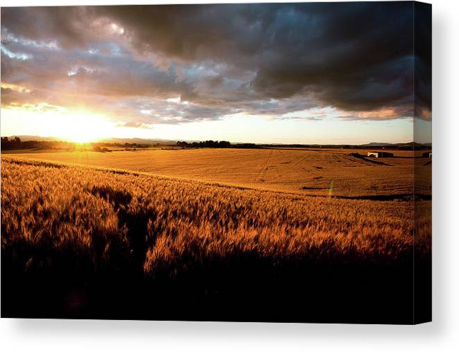 Scenics Canvas Print featuring the photograph Beautiful Sunset Over Ripe Wheat Field by Timnewman