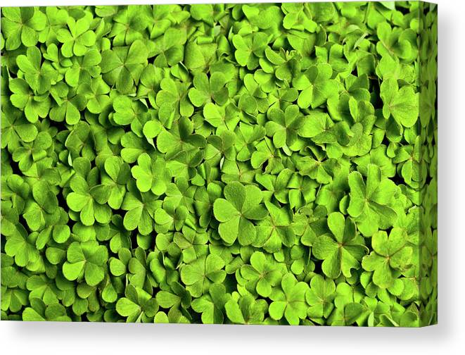 Leaf Canvas Print featuring the photograph Bed Of Clover by Kledge