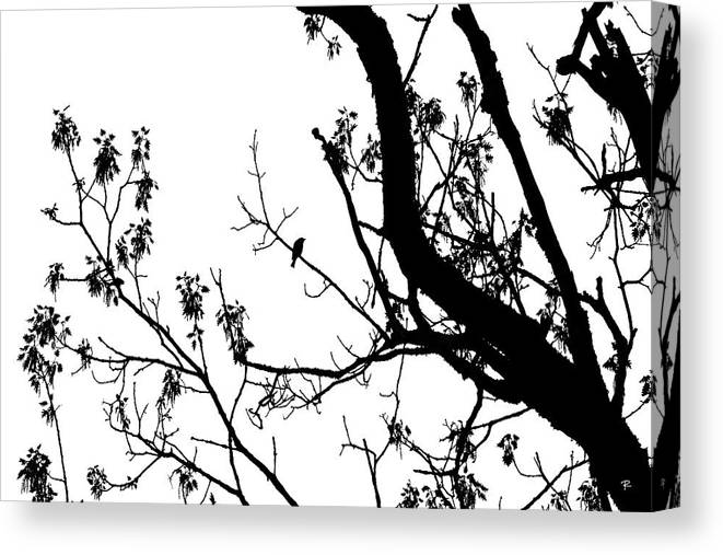 Silhouette Canvas Print featuring the photograph Bird in Tree Kingston Point Park by Tom Romeo