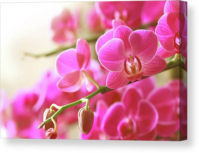 Environmental Conservation Canvas Print featuring the photograph Blooming Pink Orchid On A Green Branch by Dreaming2004
