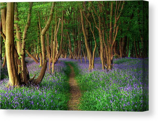 Tranquility Canvas Print featuring the photograph Bluebells In Sussex by Photography By Sam C Moore