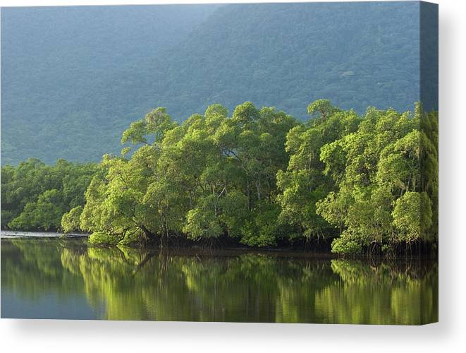 Amazon Rainforest Canvas Print featuring the photograph Brazilian Rainforest by Ranplett