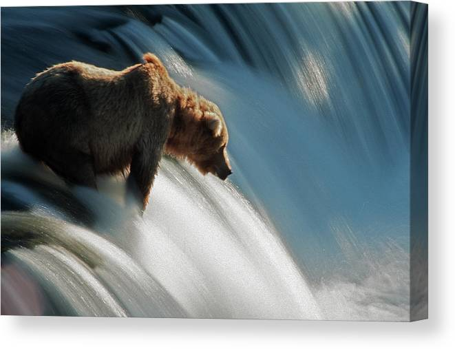 Poetry- Literature Canvas Print featuring the photograph Brown Bear At Brooks Falls by Mark Newman