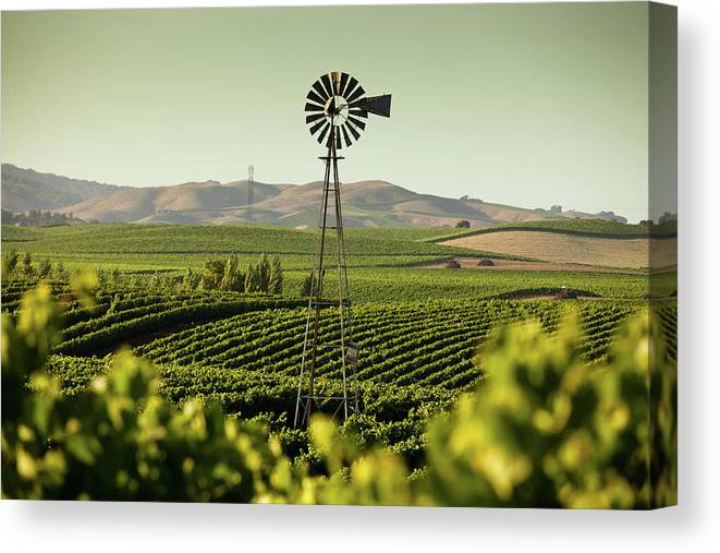 Sonoma County Canvas Print featuring the photograph California Wine Country by Halbergman