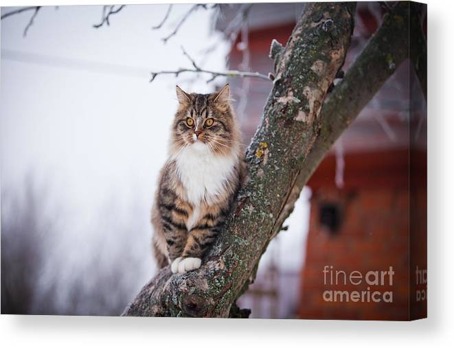 Play Canvas Print featuring the photograph Cat Outdoors In The Winter Is On The by Dezy