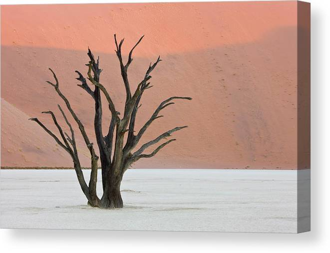 Scenics Canvas Print featuring the photograph Dead Vlei Sossusvlei Africa Namibia by Thorsten Milse / Robertharding