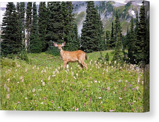 Alertness Canvas Print featuring the photograph Deer Cervidae In Paradise Park In Mt by Design Pics / Craig Tuttle