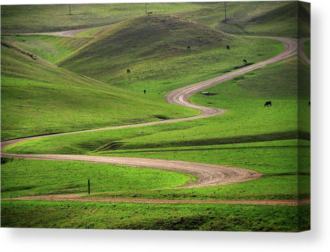 Tranquility Canvas Print featuring the photograph Dirt Road Through Green Hills by Mitch Diamond