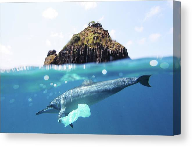 Underwater Canvas Print featuring the photograph Dolphin And Plastic Bag by João Vianna