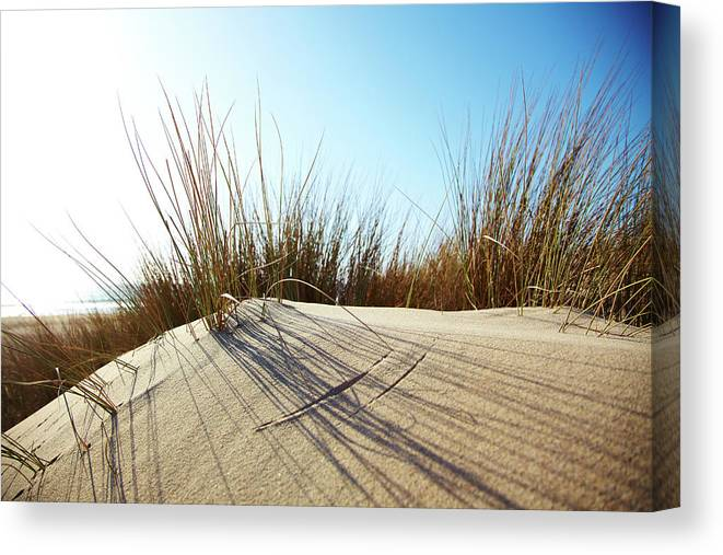 Tranquility Canvas Print featuring the photograph Dune Grass On A Sand Dune At The Beach by Thomas Northcut