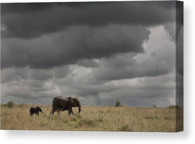 Kenya Canvas Print featuring the photograph Elephant Under Cloudy Sky by Buena Vista Images