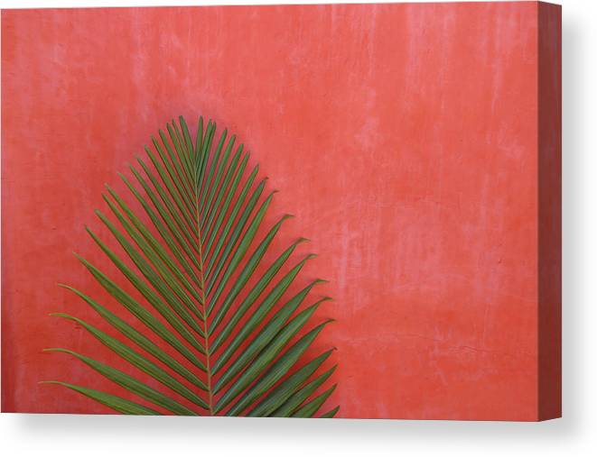 Recreational Pursuit Canvas Print featuring the photograph Exotic Background by Lucgillet