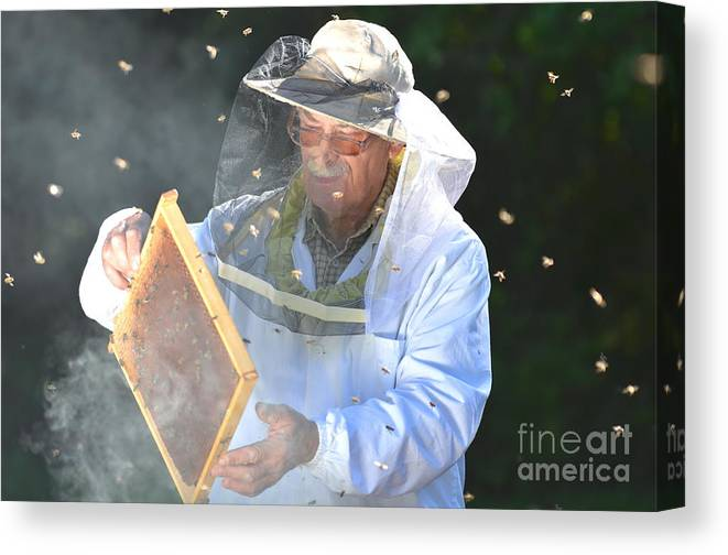 Bee Canvas Print featuring the photograph Experienced Senior Beekeeper Making by Darios