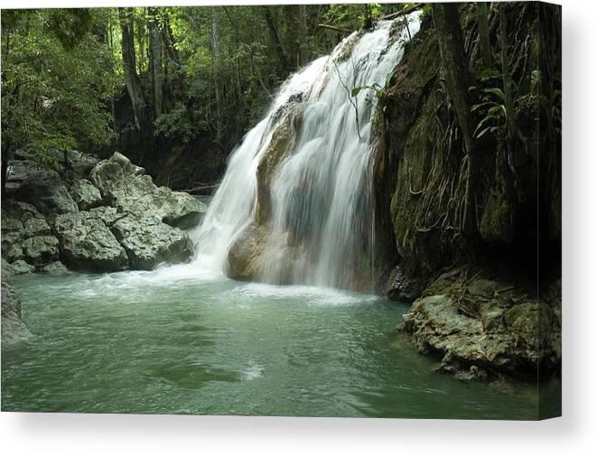 Amazon Rainforest Canvas Print featuring the photograph Finca El Paraiso by Generacionx