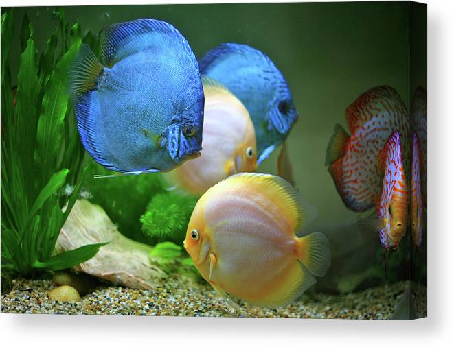 Underwater Canvas Print featuring the photograph Fish In Water by Vietnam
