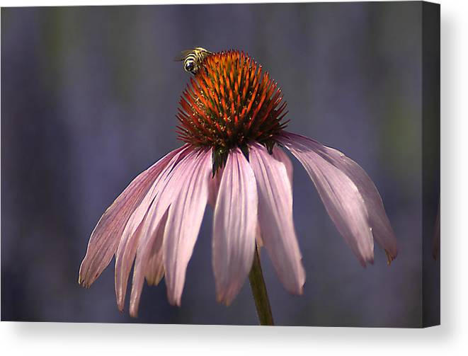 Insect Canvas Print featuring the photograph Flower And Bee by Bob Van Den Berg Photography