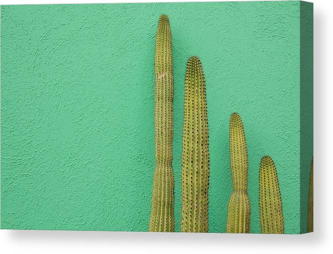 Tranquility Canvas Print featuring the photograph Green Wall And Cactus by Joanna Mccarthy