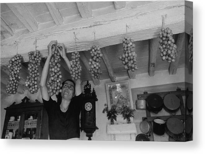 Hanging Canvas Print featuring the photograph Hanging Tomatoes by Haywood Magee