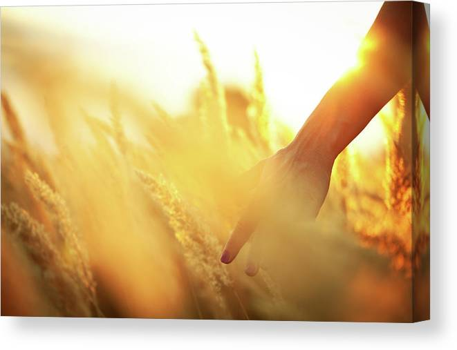 Farm Worker Canvas Print featuring the photograph Harvest In The Morning by Aleksandarnakic