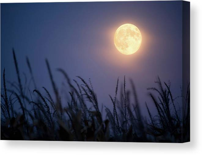 Sky Canvas Print featuring the photograph Harvest Moon by Jimkruger