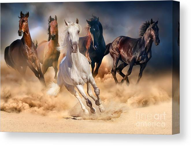 Equestrian Canvas Print featuring the photograph Horse Herd Run In Desert Sand Storm by Callipso