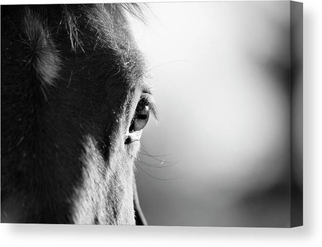Horse Canvas Print featuring the photograph Horse In Black And White by Malcolm Macgregor