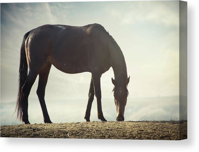 Horse Canvas Print featuring the photograph Horse In Wild by Arman Zhenikeyev - Professional Photographer From Kazakhstan
