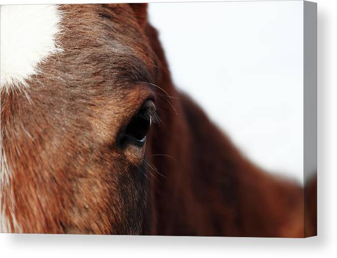 Horse Canvas Print featuring the photograph Horse Portrait by R-j-seymour