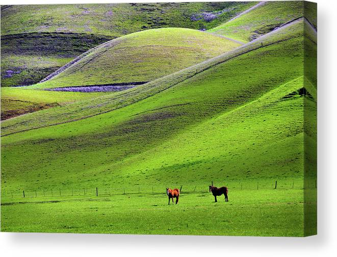 Horse Canvas Print featuring the photograph Horses In Hill Country by Mitch Diamond