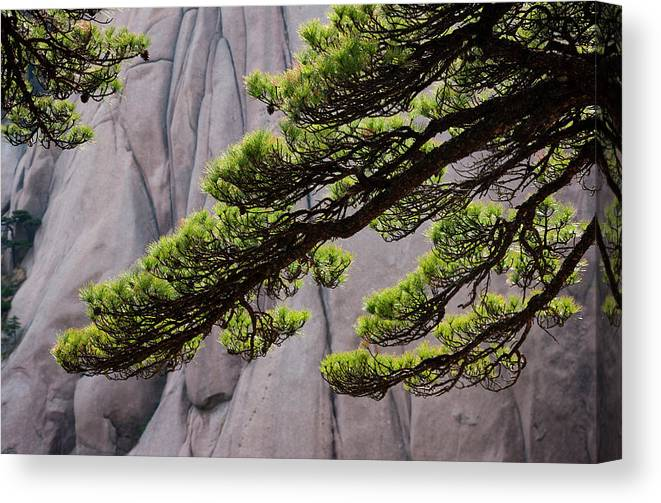Chinese Culture Canvas Print featuring the photograph Huang Shan Landscape, China by Mint Images/ Art Wolfe