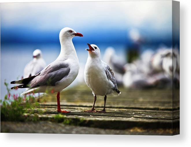 Animal Themes Canvas Print featuring the photograph Hungry Gull by Ignacio Hennigs