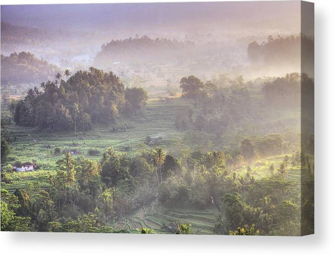 Tranquility Canvas Print featuring the photograph Indonesia, Bali, Forest Landscape by Michele Falzone