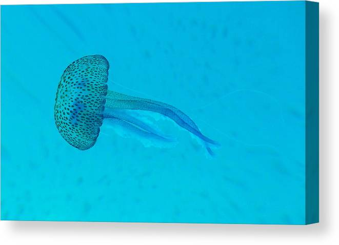 Underwater Canvas Print featuring the photograph Jellyfish In Wild by Sir Francis Canker Photography