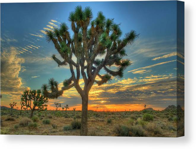 Scenics Canvas Print featuring the photograph Joshua Tree At Sunrise by Photograph By Kyle Hammons