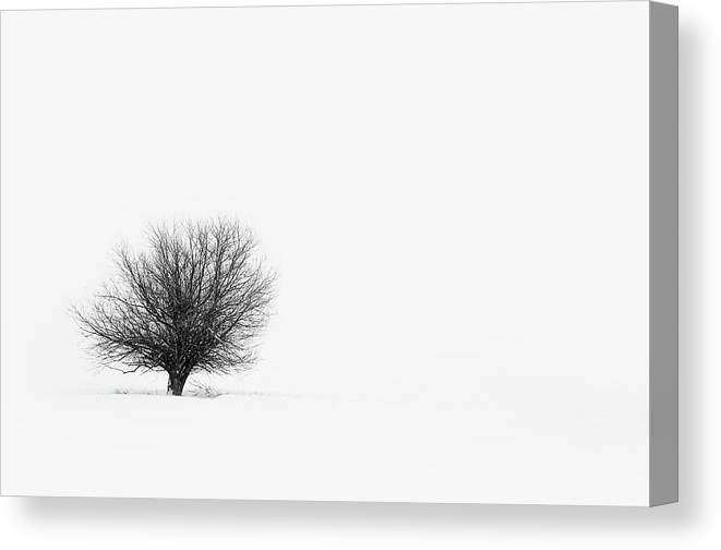 Tranquility Canvas Print featuring the photograph Lone Tree by Jrj-photo