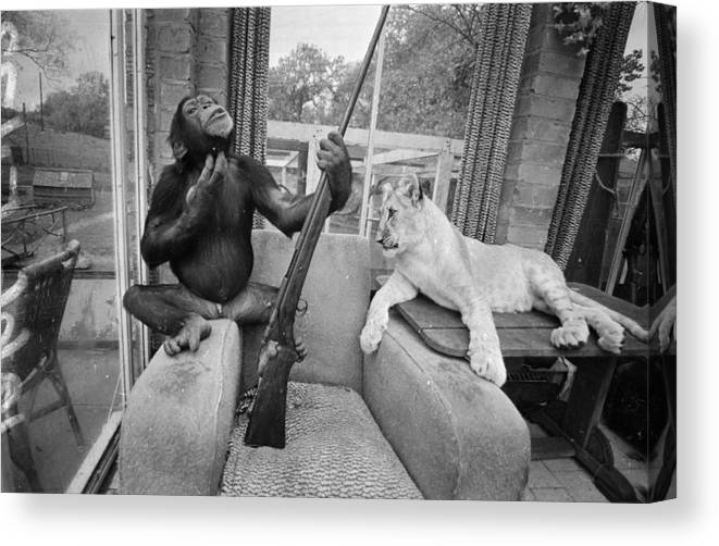 Pets Canvas Print featuring the photograph Monkeying About by R Dumont