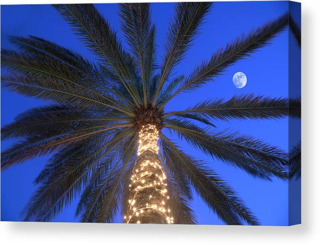 Tranquility Canvas Print featuring the photograph Moonrise Near Lit-up Palm Tree by Grant Faint